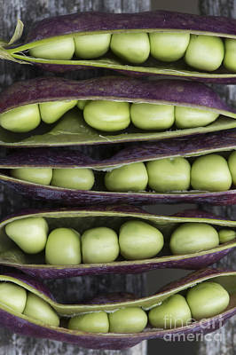 Gardening Photograph - Purple Podded Pea Pattern by Tim Gainey