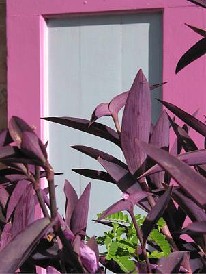 Caribbean Flowers Print featuring the photograph Purple Power by Kurt Gustafson