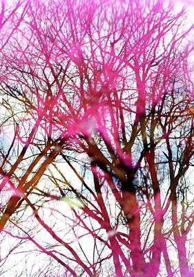 Purple Reflection 35mm Film Print by Dave Morgan