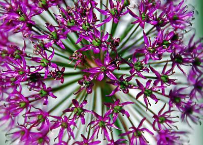 Aimeemaher Photograph - Purple Starlight by Aimee L Maher Photography and Art Visit ALMGallerydotcom
