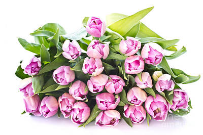 Purple Tulips Print by Boon Mee