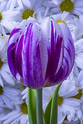 Purple White Tulip Print by Garry Gay