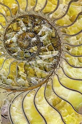 Pyrites Ammonite Spiral Calcite Crystals Print by Paul D Stewart