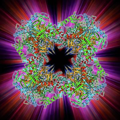 Pyruvate Dehydrogenase Complex Enzyme Print by Laguna Design