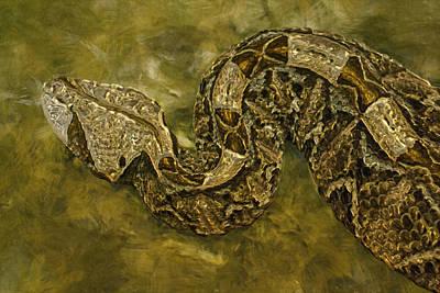Python Digital Art - Python by Jack Zulli