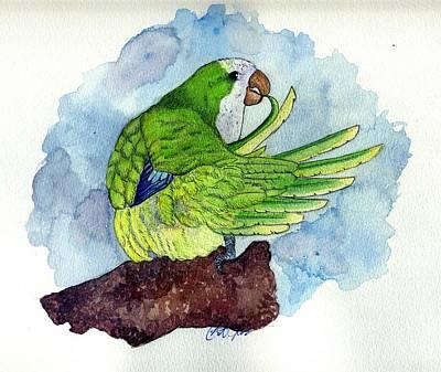 Quaker Parakeet Bird Portrait   Print by Olde Time  Mercantile