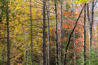 Forest Photograph - Quebec Forest In Autumn by Rob Huntley