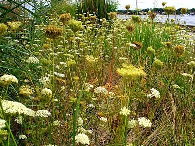 Queen Anne's  Lace Riverfront  Print by Rick Todaro