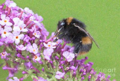 Bumblebee Digital Art - Queen Buff Tailed Bumblebee On Buddleja Bombus Terrestris by Liz Leyden