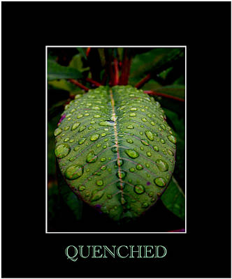 Photograph - Quenched 2 by David Weeks