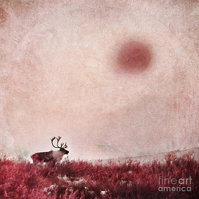 Caribou Photograph - Quest For Solitude by Priska Wettstein