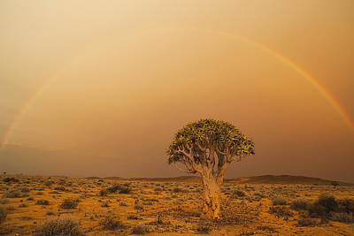 Quiver Tree And Rainbow Namib Desert Print by Theo Allofs