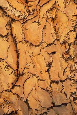 Quiver Tree Bark Print by Tony Camacho