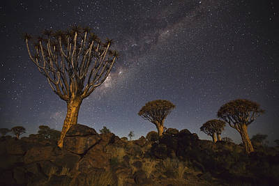Quiver Trees Andthe Milky Way Print by Vincent Grafhorst
