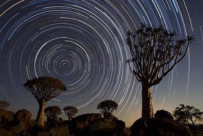 Photograph - Quiver Treesand Star Trails by Vincent Grafhorst