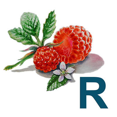 Raspberry Painting - R Art Alphabet For Kids Room by Irina Sztukowski
