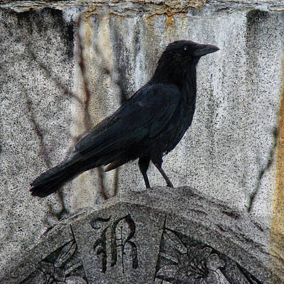 R Is For Raven Print by Gothicolors Donna Snyder