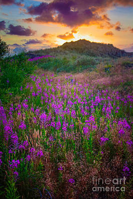 Danish Photograph - Raabjerg Fireweeds by Inge Johnsson