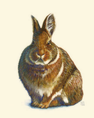 Rabbit Painting - Rabbit by Catherine Noel