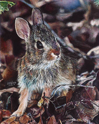 Rabbit In The Woods Original by Joshua Martin