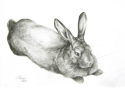 Rabbit Print by Jeanne Maze