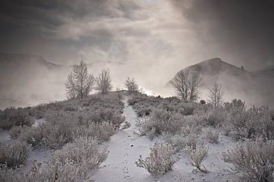 Fort Collins Photograph - Rabbit Tracks by Michael Van Beber