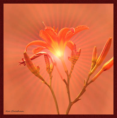 Blooming Digital Art - Radiant Square Day Lily by Kae Cheatham
