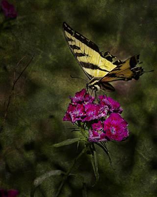 Ragged Wings Print by Belinda Greb