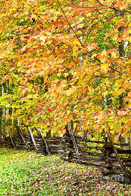 Rail Fence Fall Color Print by Thomas R Fletcher