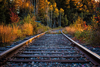 Rails Pondicherry Nwr Print by Jeff Sinon