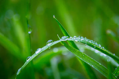 Turf Photograph - Rain Covered Grass by Gary Gillette
