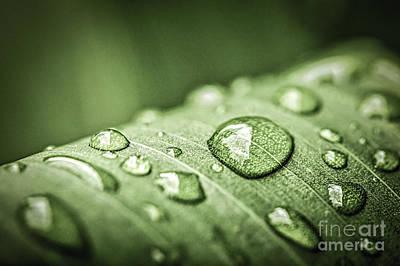 Rain Drops On Green Leaf Print by Elena Elisseeva