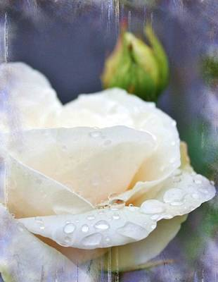 Rain Drops On Roses Print by Cathie Tyler