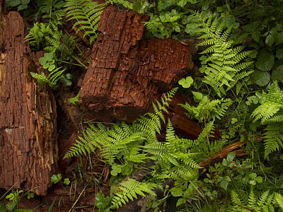 Forest Floor Photograph - Rain Forest Abstract by Jean Noren