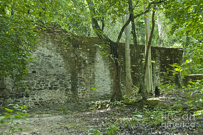 Rain Forest Jungle And Ruins At Calakmul Print by Ellen Thane