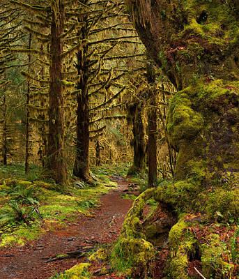 Rain Forest Path Print by Leland D Howard
