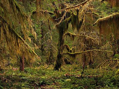 Rain Forest Texture Print by Leland D Howard