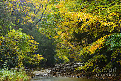West Fork Photograph - Rain Gauley River Headwaters by Thomas R Fletcher
