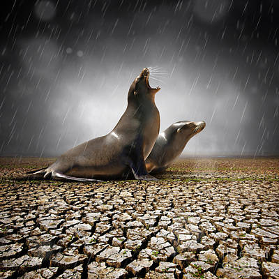 Sea Lion Photograph - Rain Relief by Carlos Caetano