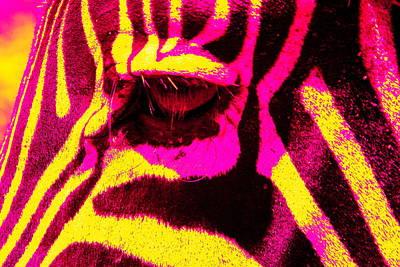 Rainbow Animals - Zebra  Original by Aidan Moran