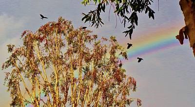 Black Photograph - Rainbow Crows by Savanna Paine