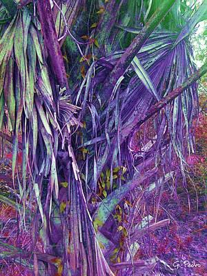 George Pedro Art Photograph - Rainbow Jungle 1 by George Pedro