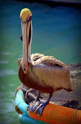 Rainbow Pelican Print by Karen Wiles