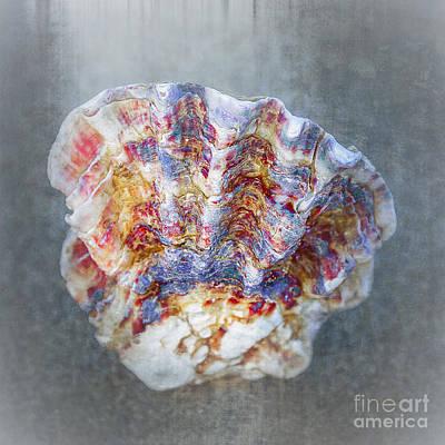 Rainbow Shell Print by Svetlana Sewell