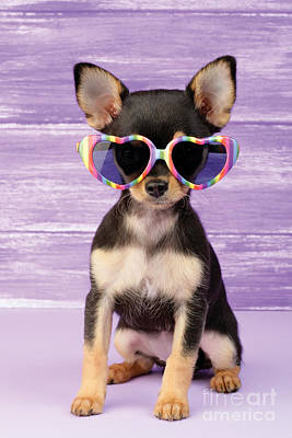 Puppy Digital Art - Rainbow Sunglasses by Greg Cuddiford