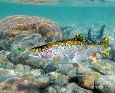Rainbow Trout And Green Ghost Print by Paul Buggia