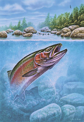Rainbow Trout Split Level Print by Jon Q Wright
