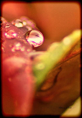 Nature Abstracts Mixed Media - Raindrop Face by Bellesouth Studio