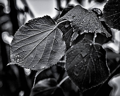 Raindrops After The Storm Print by Brian Carson
