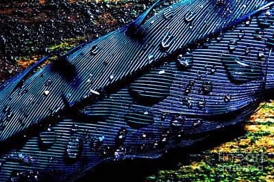 Cyanocitta Cristata Photograph - Raindrops On Feather by Thomas R Fletcher